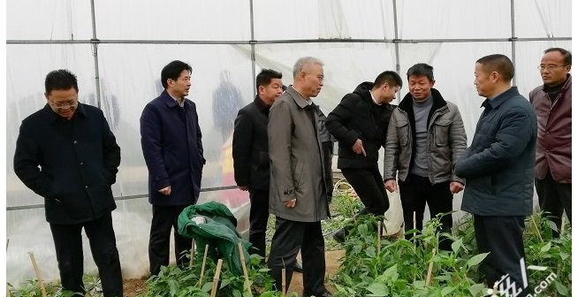 荆州市委书记何光中到松滋调研,进种植大棚